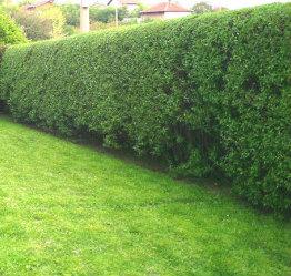 Hedge Cutting Camden